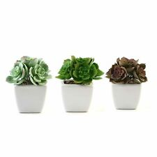 """Set of 3 5"""" tall Assorted Artificial Faux Succulent Plants with Off White Pots"""