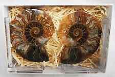 Cut and Polished Fossil Ammonite Pair - Split Ammonite - BNIB (A)