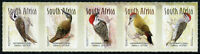 South Africa Birds Stamps 2020 MNH Woodpeckers Knysna Woodpecker 5v S/A Strip