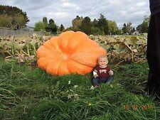 Dill's Atlantic Giant Pumpkin Seeds