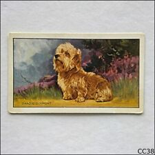Gallaher Dogs #15 Dandie Dinmont Terrier 1936 Cigarette Card (CC38)