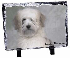 Tibetan Terrier 'Yours Forever' Photo Slate Christmas Gift Ornament, AD-TT1ySL