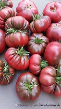 10+ PURPLE CALABAS alte lila braune Tomate flachrund gerippt ertragreich robust