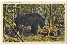 """Vintage Postcard """"Black Pennsylvania Bear"""""""