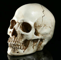 1:1 Human Skull Replica Resin Model Realistic Retro Medical Art Teach Life Size