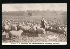 Bucks Buckinghamshire SLOUGH Fat Stock Show Advert Hadfields Manure PPC