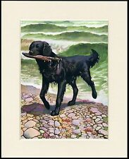 FLAT COATED RETRIEVER RETRIEVING STICK CHARMING DOG PRINT MOUNTED READY TO FRAME