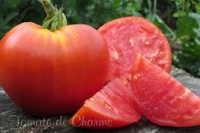 10 graines de tomate rare Cœur de Bœuf de Concours productive délicieuse m.bio