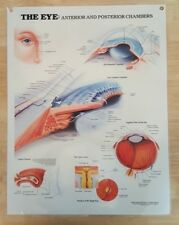 Anatomical Chart Company - 1991 The Eye: Anterior & Posterior Educational