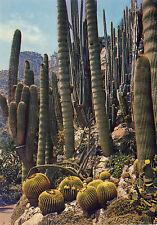 AK: Principauté de Monaco - Le Jardin Exotique - Trichocerus Pasacana (Argentine