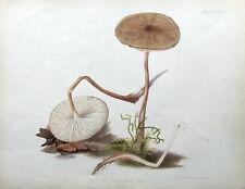 ROOTING AGARIC fungus, Hussey original antique mushroom fungi print 1847