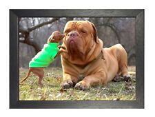 Bullmastiff With Chiwawa Dog Puppy Sweet Cute Animal Poster Nature Beautiful