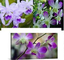 30x Cattleya Orchideen Samen 3 Sorten Zimmer Garten Blume Pflanze Neuheit #22