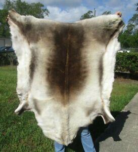 Beautiful Reindeer skin, Reindeer hide fur pelt, caribou # 43286