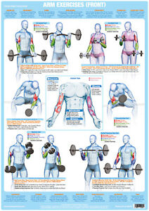 Bodybuilding Arm Muscles Poster Biceps Weight Training Chart