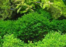 800 pcs Fern Moss Live Aquarium Plants Aquarium Grass Seeds Fish Tank Landscape