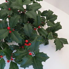 FRESH LIVE Watered CHRISTMAS HOLLY BOUGHS/CUTTINGS, approximately 1 pound