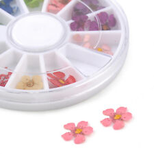 12 colors dried flower leaves for nail art decorations natural nail dry flowers