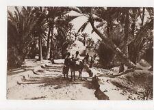 Marabout Dans l'Oasis North Africa Vintage RP Postcard 473a