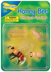 HONEY BEE life cycle 4 stages - Outdoor learning Insect Lore plastic resource