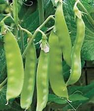 PEA SEED, SUGAR DADDY, HEIRLOOM, ORGANIC, NON GMO,  20+ SEEDS, PERFECT PEAS