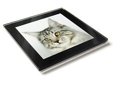 MAIN COON SILVER TABBY Cat Kitten Premium Glass Table Coaster with Gift Box