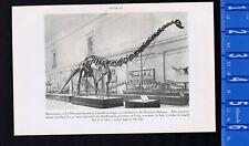 Restoration of Diplodocus Longus Dinosaur & National Zoo Penguin Cage-1934 Print
