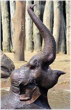 Elephant 8x10 Photo Picture