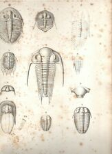 Organization of Trilobites from Living Affinites- 1846- Ray Society- Burmeister
