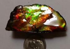 Bright Green & Red AMMOLITE Gemstone Rough 43x21mm