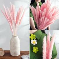 15Pcs//Set Natural Dried Pampas Grass Reed Wedding Flower Bunch Floral Decor B2H
