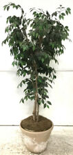 Faux Houseplant W/ Planter Lot 2285