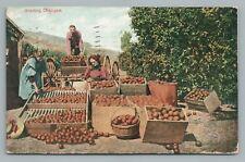 """""""Grading Oranges"""" California Citrus Industry—Antique PC Los Angeles Occupation"""