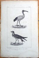 La Perdrix de Mer, L'Jbis Sacre - 1830s French Bird Print