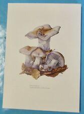 Planche poster art print Affiche Botanique Champignon Tricholome Nu Pied-Bleu