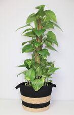 Woven Seagrass Plant Pot Holder Houseplant Storage Basket Home Planter Stripe