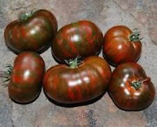 30 CHOCOLATE STRIPES TOMATO  2021 (all non-gmo heirloom vegetable seeds!)