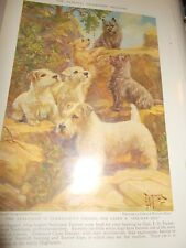 E Miner Sealyham & Cairn Terrier book plate 1936 National Geographic Mag