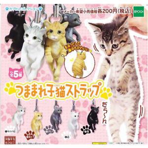 Dangling Scruffed Cat Kitten Cell Phone Charm Strap (1 Random)
