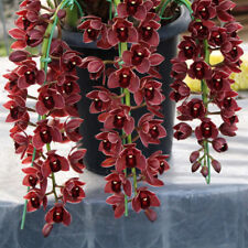 Dark Red Cymbidium Orchid Flower Seeds Flowers Orchid Seeds 100 Pcs