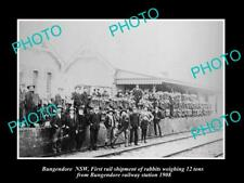 OLD LARGE HISTORIC PHOTO OF BUNGENDORE NSW, 12 Tons OF RABBITS AT RAILWAY 1908
