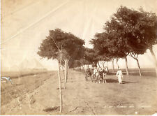 Photo albuminée - ZANGAKI (Egypte) - Avenue des Pyramides - Années 1870 -