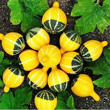 Small Fruit Bottle Gourd Seed 10 Seeds Lagenaria Siceraria Microphone Melon B071