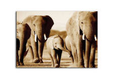 ELEPHANT CANVAS WALL ART PICTURE PRINT BROWN framed A2