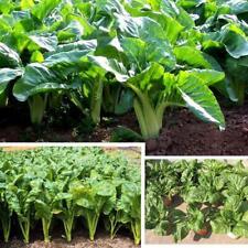 Chard Swiss Blend Vegetable seeds 200 pcs Pack Decorating Flower Home Garden TP