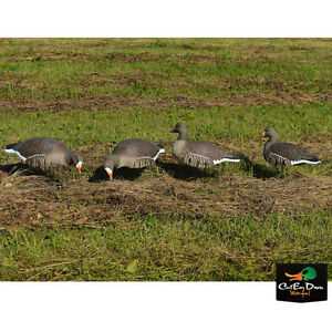 AVERY GREENHEAD GEAR GHG PRO GRADE SPECKLEBELLY SHELLS HARVESTER PACK 12 DECOYS