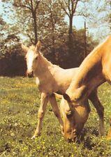 Isabela Horses Pony Chevaux Pferde