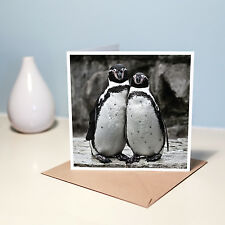 Penguin Couple Blank Note Card - Photo Greetings Card For Any Occasion