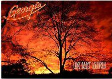 Georgia Postcard On My Mind Sunset Trees Sky Ablaze Orange Clouds New