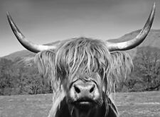 HIGHLAND COW  WALL ART  * LARGE A3 SiZE QUALITY CANVAS ART PRINT